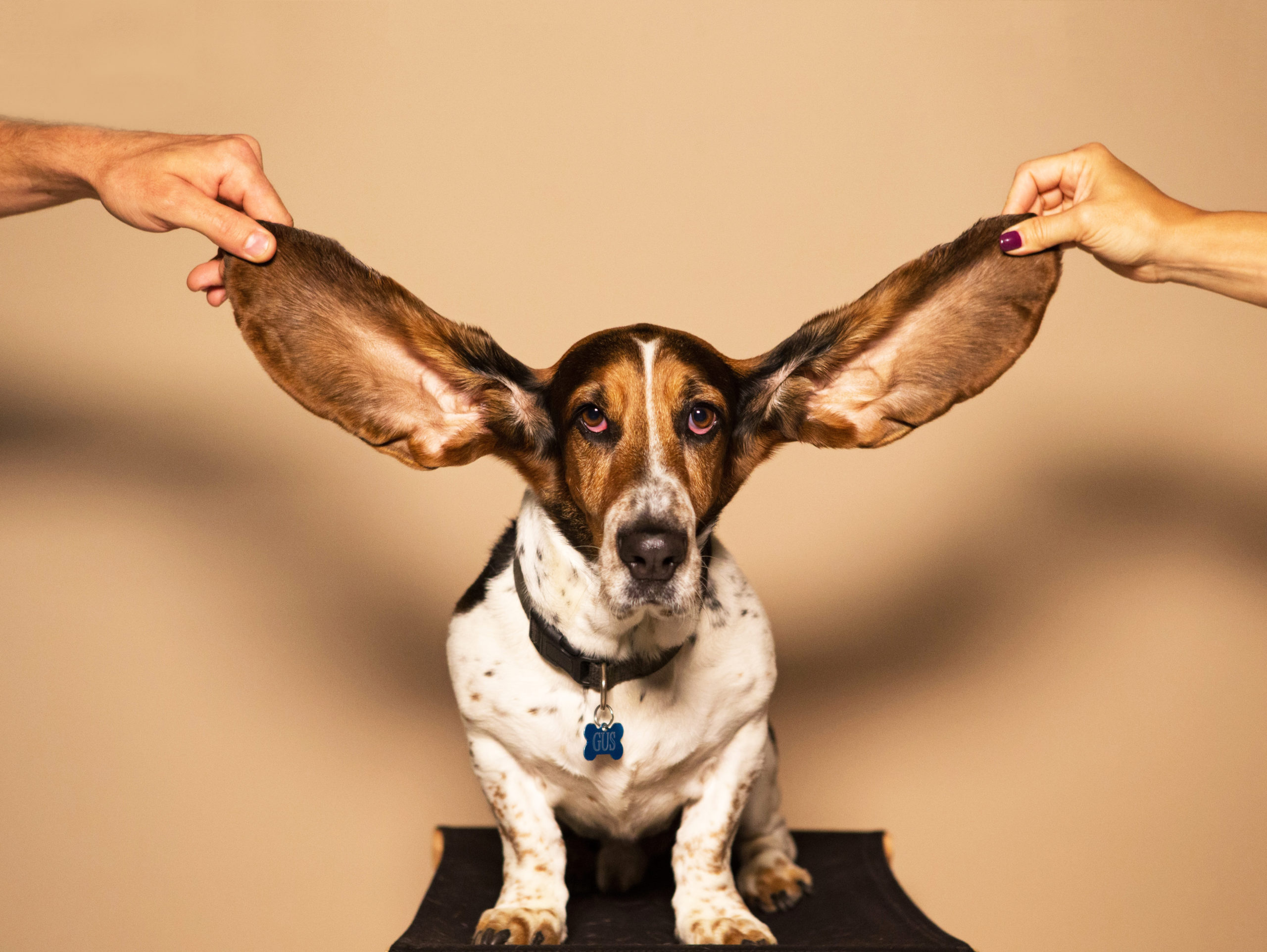 Happy New Ear from AudioFetch